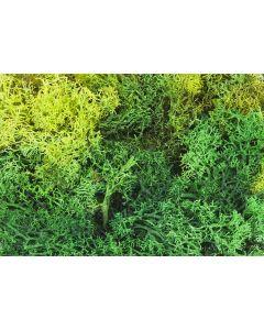 Faller Ijslands mos, gesorteerd, groen, 50 g 170729