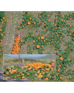 Busch pompoenenveld 1201