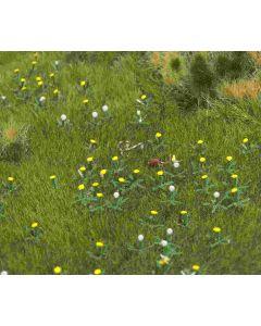 Busch leeuwenbek planten 1220