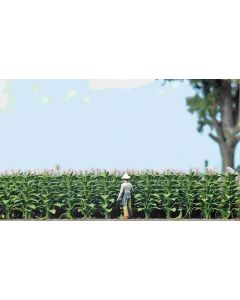 Busch tabaksplanten 1221