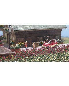 Busch rozen 36 st.k-kl.(7/15) * 1241