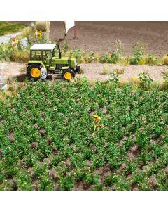 Busch aardappelplanten 1266
